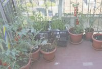Modular Urban Gardening In Apartments – How To Grow A Garden In An Apartment regarding New What Is Urban Gardening