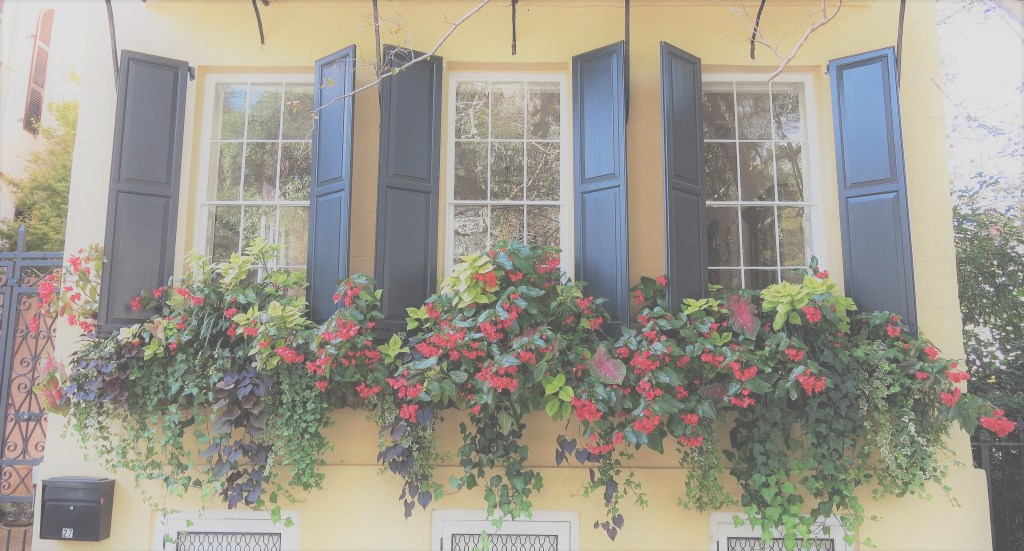Fabulous The Best Cascading Flowers For Window Boxes - Hooks & Lattice Blog regarding Best of Cascading Flowers For Window Boxes