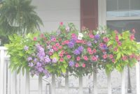 Lovely Had Coral Calibrachoa And Purple Verbena This Year – Like The Pink within Cascading Flowers For Window Boxes