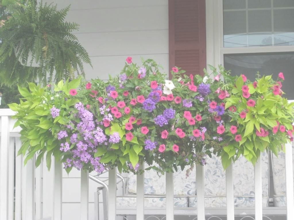 Lovely Had Coral Calibrachoa And Purple Verbena This Year - Like The Pink within Cascading Flowers For Window Boxes