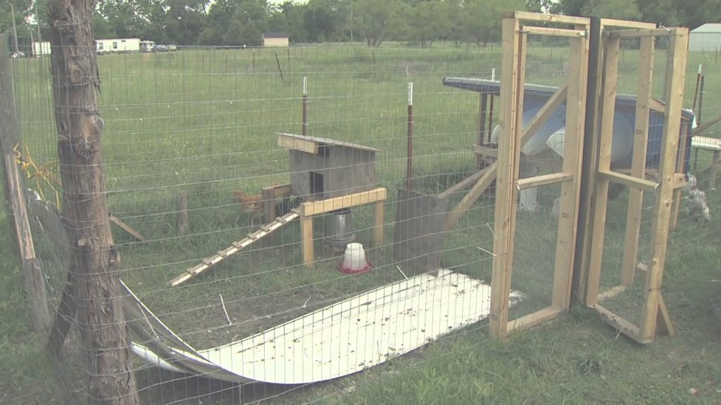 Modern Raising Backyard Chickens - Youtube within How To Raise Backyard Chickens