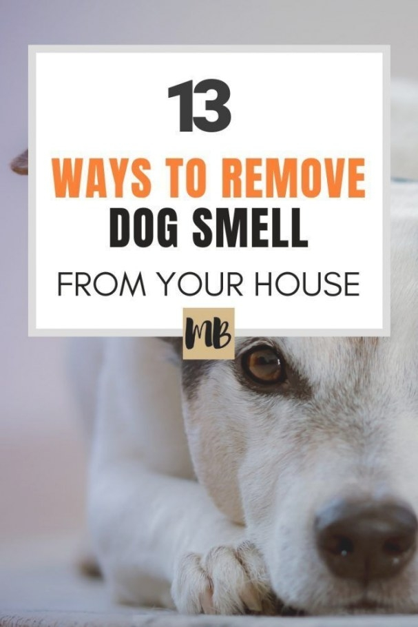 13 Ways To Remove The Dog Smell From Your House | Dog regarding Whole House Smells Like Dog Urine