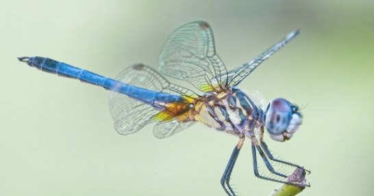 7 Things You Never Knew About Dragonflies | Mnn - Mother throughout What Do Dragonflies Eat