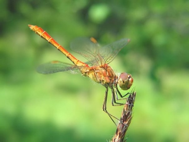Article Suggests Dragonflies Are The Most Effective throughout What Do Dragonflies Eat