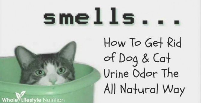 Get Rid Of Dog And Cat Urine Odors The All Natural Way in Whole House Smells Like Dog Urine