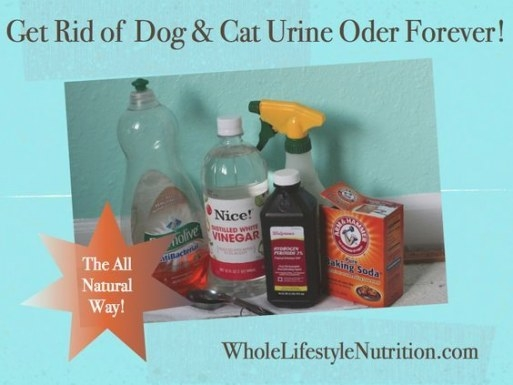 Get Rid Of Dog And Cat Urine Odors The All Natural Way with Whole House Smells Like Dog Urine