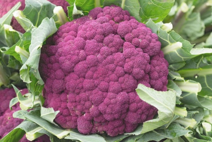 Graffiti Cauliflower | Premium Garden Seeds | Hoss Tools regarding 20-20-20 Fertilizer