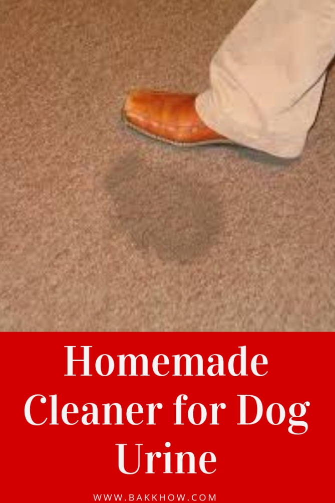 Homemade Enzyme Cleaner For Dog Urine | Dog Urine, Enzyme throughout Whole House Smells Like Dog Urine