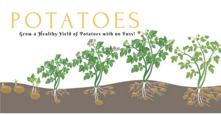 How Long Does It Take To Grow Potatoes? - Gardening Tips for How Long Does It Take For A Tree To Grow