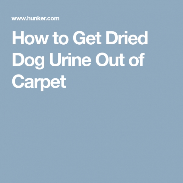 How To Get Dried Dog Urine Out Of Carpet | Dog Urine with regard to Whole House Smells Like Dog Urine