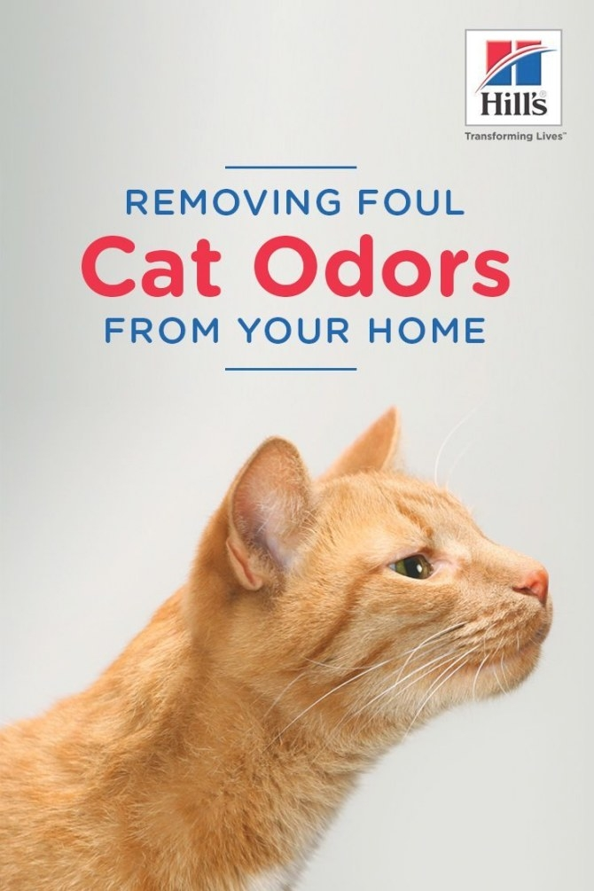 How To Get Rid Of Cat Odors For Good! | Cat Urine Smells pertaining to Whole House Smells Like Dog Urine
