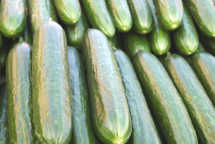 Stonewall Cucumber | Hybrid Premium Garden Seeds | Hoss Tools throughout 20-20-20 Fertilizer
