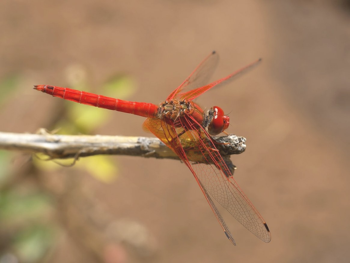 Tarzan, Paddington And Dragonflies And Writing | Yours In within What Do Dragonflies Eat