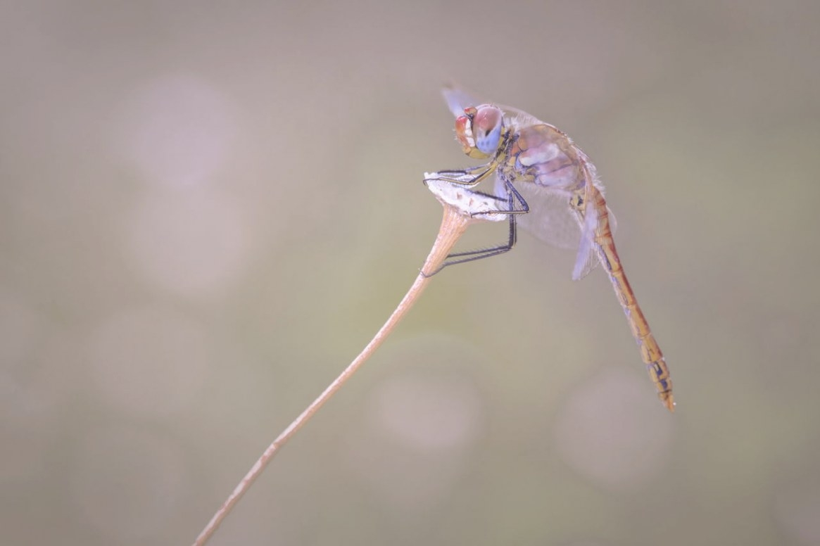 What'S A Dragonfly Habitat Like? What Do Dragonflies Eat pertaining to What Do Dragonflies Eat