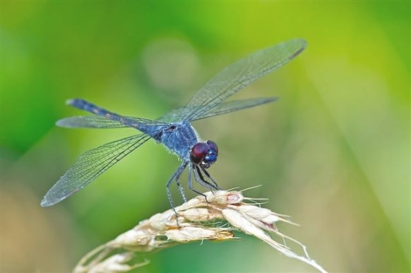 What'S A Dragonfly Habitat Like? What Do Dragonflies Eat throughout What Do Dragonflies Eat