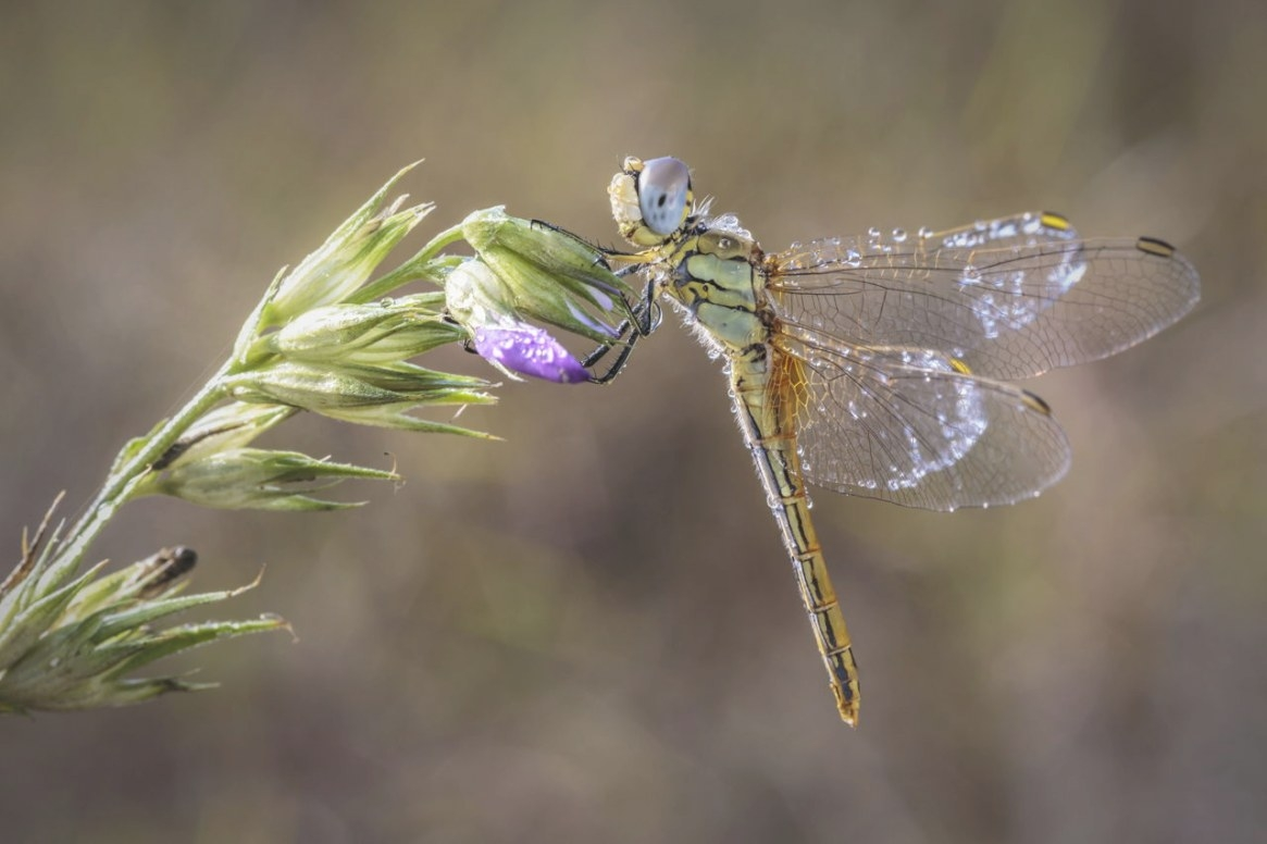 What'S A Dragonfly Habitat Like? What Do Dragonflies Eat within What Do Dragonflies Eat