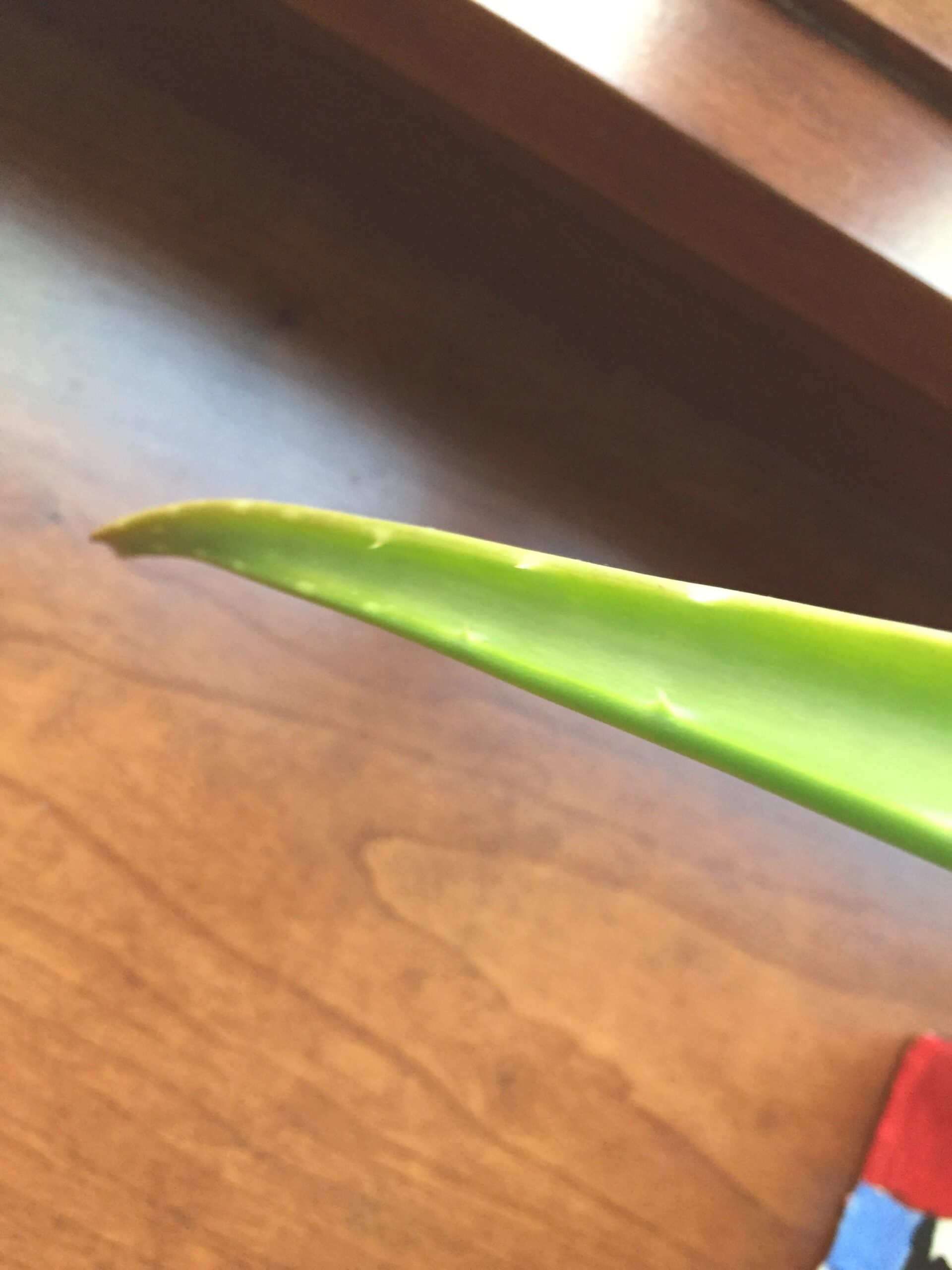 Why Is My Aloe Plant Turning Brown with Aloe Plant Turning Brown