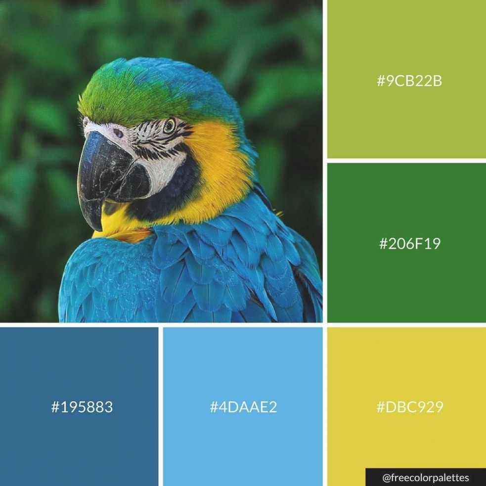 Parrot | Blue And Green | Color Palette Inspiration regarding Inspirational Color Palette Green